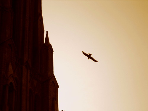 Eagle Soars over St. Philomena's Church