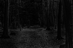 Dark Path  Thornberry  Dark Path In The Woods