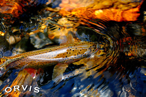 Orvis Fly Fishing Contest - #12 BWO