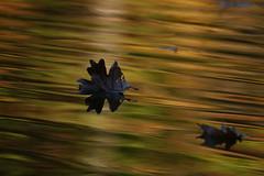 Leaves~