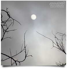 Cita-Citaku [UNEDITED!] (AnNamir c[_]) Tags: sun silhouette misty sunrise canon square eos branches kitlens nopeople malaysia 7d siluet pahang kayu unedited lipis matahari ranting kabus keledek 111010 annamir sahabatsejati getokubicom