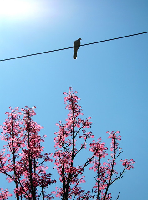 a bird on the wire