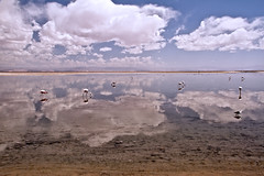 Salar de Atacama (Thelma Gatuzzo) Tags: world chile travel sky lake reflection southamerica nature clouds landscape lago desert horizon salt flamingos 7d atacama laguna salar flamencos horizonte salardeatacama americadosul americadelsur mywinners thelmagatuzzo