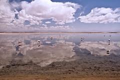 Salar de Atacama (Thelma Gatuzzo (off the air)) Tags: world chile travel sky lake reflection southamerica nature clouds landscape lago desert horizon salt flamingos 7d atacama laguna salar flamencos horizonte salardeatacama americadosul americadelsur mywinners thelmagatuzzo