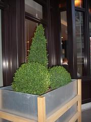 suggestive shrubbery