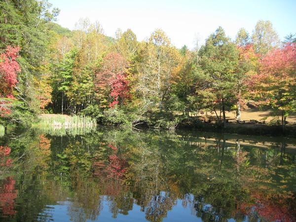 the-pond