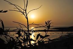Atardecer en Zahora (SrPolo) Tags: sunset espaa beach nature contraluz atardecer andaluca spain playa puestadesol cdiz zahora nikond700 srpolo nikkor50mmf14gafs