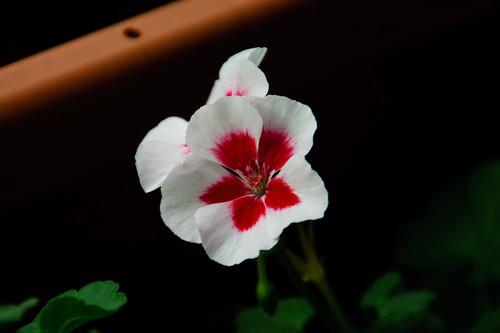 My garden 0095 October 10, 2010