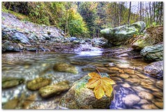 The yellow leaf - HDR (Margall photography) Tags: autumn mountain water leaves yellow composition canon river landscape photography leaf natural valle marco cuneo hdr 30d grana galletto margall coumboscuro mygearandmepremium mygearandmebronze colorssigma