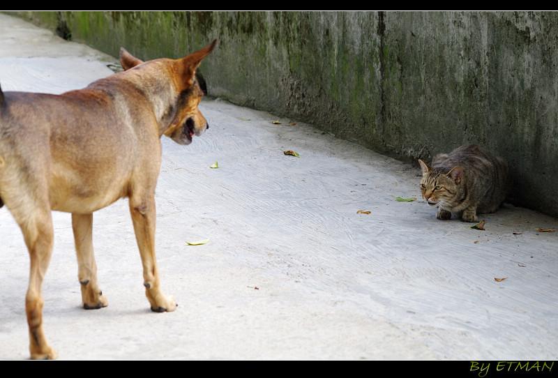 瑞芳 貓佔猴硐