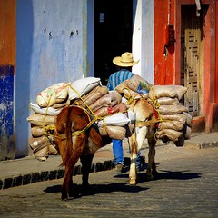 burro bottoms and burdens (msdonnalee) Tags: mxico mexico burro mexique fertilizer mexiko messico  cobblestonestreet i  photosfromsanmigueldeallende platinumpeaceaward fotosdesanmigueldeallende bagsoffertilizer fertilizersalesman doortodoorfertilizersales