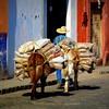 burro bottoms and burdens (msdonnalee) Tags: méxico mexico burro mexique fertilizer mexiko messico 墨西哥 cobblestonestreet i メキシコ photosfromsanmigueldeallende platinumpeaceaward fotosdesanmigueldeallende bagsoffertilizer fertilizersalesman doortodoorfertilizersales
