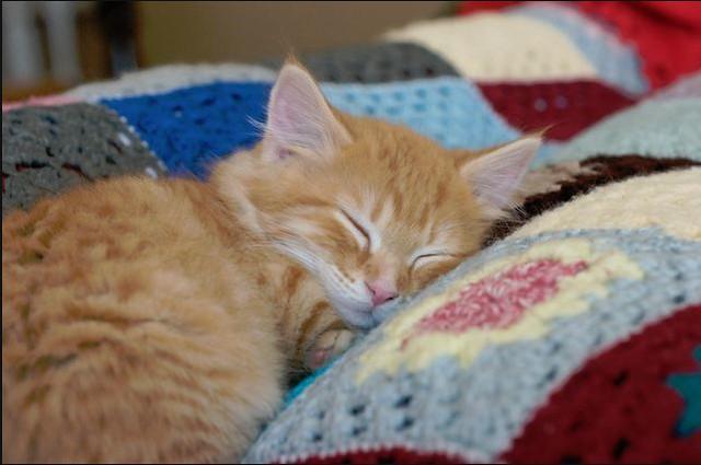 cute ginger rescued sleepy kitten