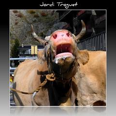 MUUUUUUUUUUUUUUUUU !!!!!!!!!!!! (Jordi TROGUET (Thanks for 1.862.797+views)) Tags: leica friends cow europa feria andorra vache vaca x1 fira jtr canillo superlativas theunforgettablepictures theunforgettablepicture theperfectphotographer alohagroup jorditroguet spiritofphotography dragondaggeraward leicax1 ringexcellence leicacameraagleicax1 firacanillo2010