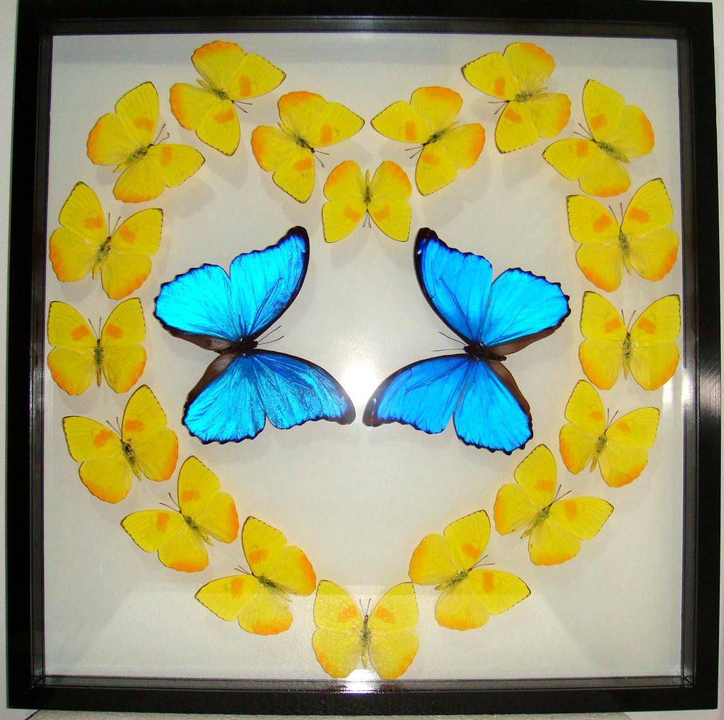 Mounted Butterfly Heart Art Wall Decor in Black Frame