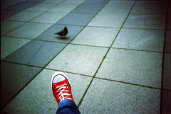 chuck twitter (Jay Panelomo) Tags: bird film analog 35mm ed iso200 lomo lca shoes kodak pigeon slide converse analogue elitechrome allstar chucktaylor panelomo