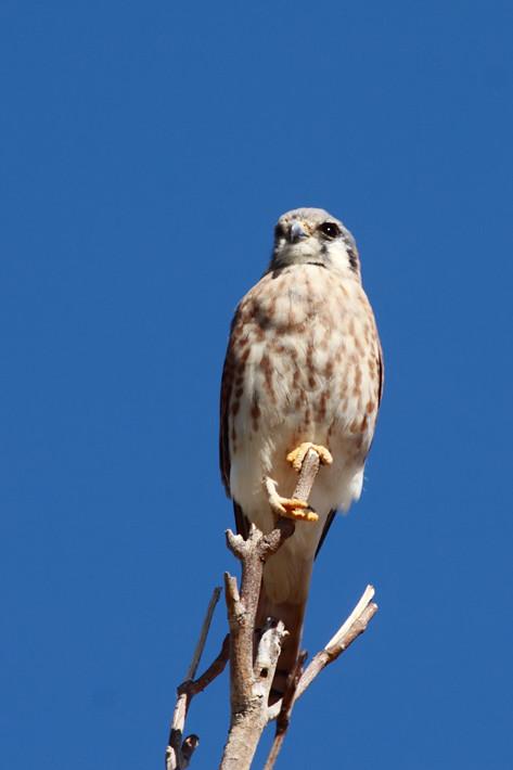 100810_birding01