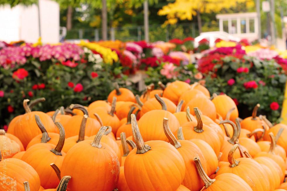 pumpkins - Copy-1
