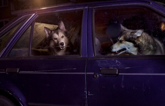 dogscar5-550x355