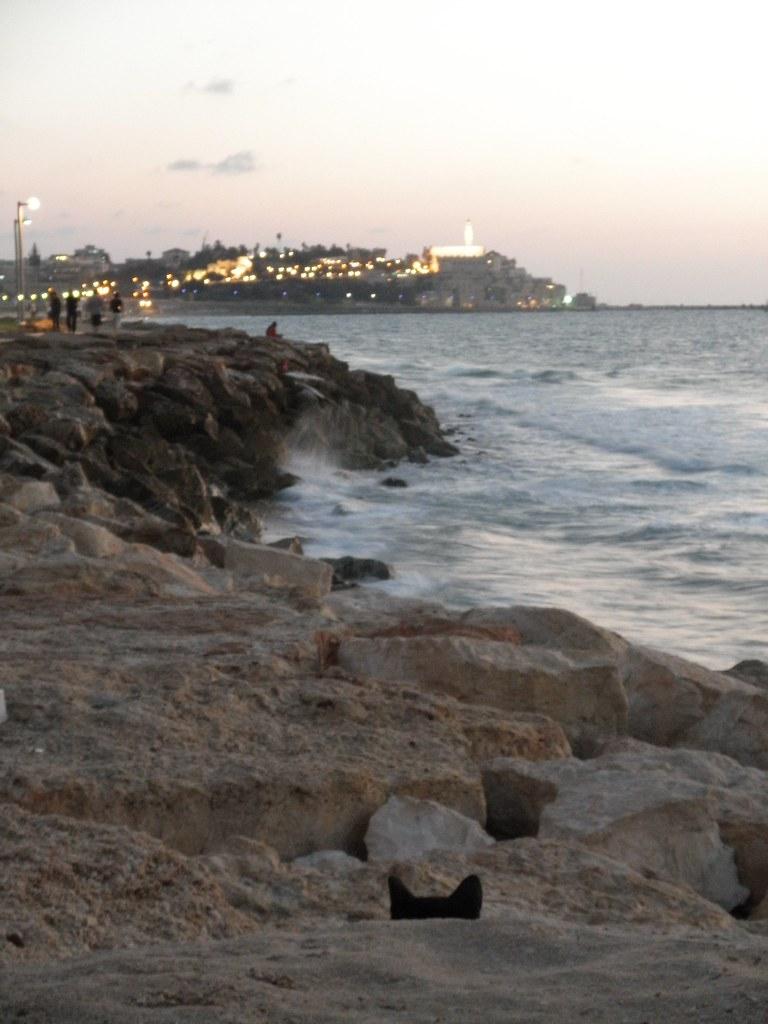 Cat's Eye View of Jaffa