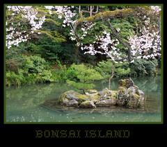 Bonsai Island (Hopeisland) Tags: park pond bonsai cherryblossoms
