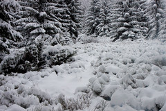20100106-IMG_6113.jpg (Rafal Kubik) Tags: winter snow mountains forest landscape beskidy beskidzywiecki