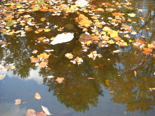 Longwood October 2010 137