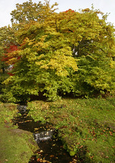 The Stream @ wakehurst (Adam Swaine) Tags: county uk autumn trees red england green english water beautiful grass leaves yellow rural canon landscape countryside flora britain parks east streams eastsussex waterside 2010 counties wakehurstplace naturelovers thisphotorocks adamswaine wwwadamswainecouk ntsussex