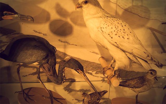 MoS, birds