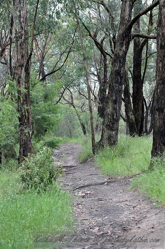 A path a Baluk Willam Reserve