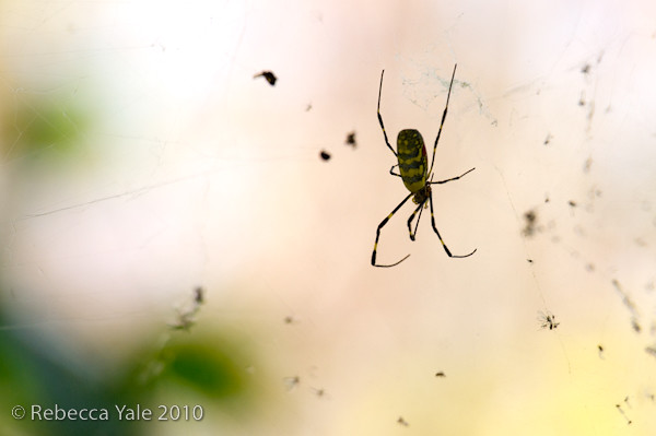 RYALE_Spiders_2