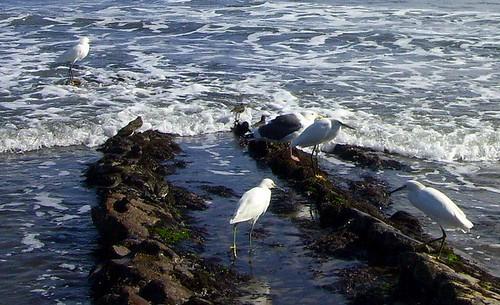 Shorebirds Ledbetter 10