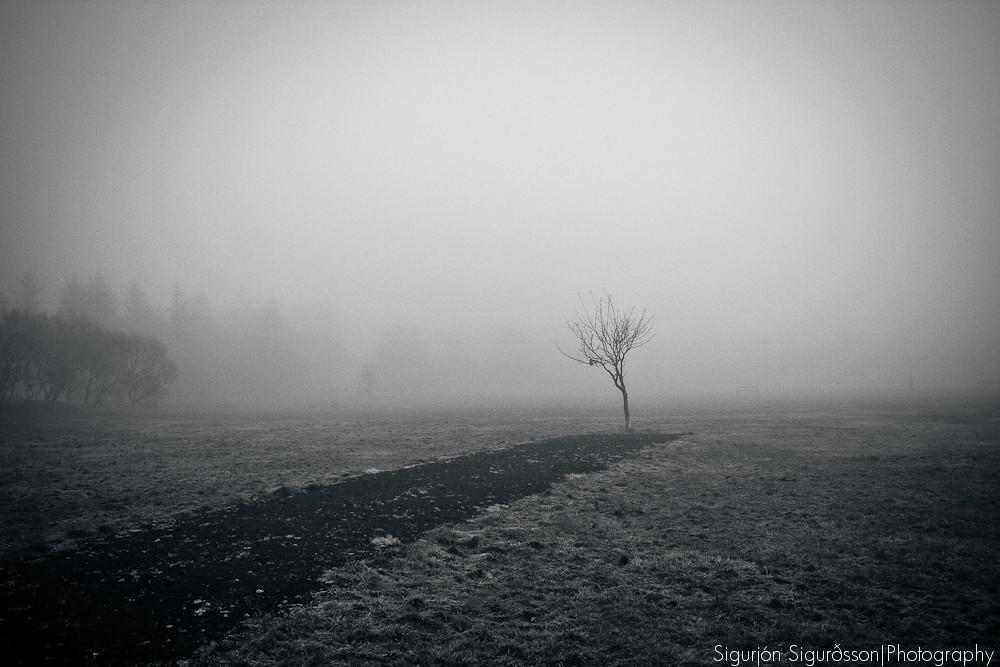 IMAGE: http://farm5.static.flickr.com/4110/5184874250_d74493a1ca_b.jpg