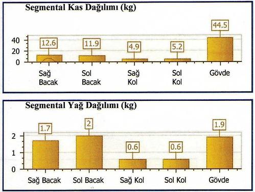 vücutta kas segmental kas dağılımı ve bölgesel yağlanma