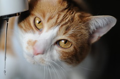 ready for a drink (dicatae) Tags: portrait cats pets animals kitties