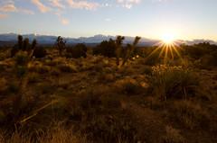 Mojave Morning (CL Nichols) Tags: california morning camping sunrise nikon joshuatree mojave d7000 tokina1116mmf28
