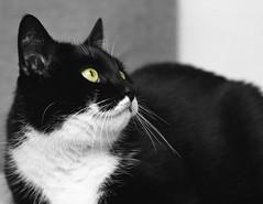 catowayo (The Cassandra Project) Tags: bw film monochrome cat 35mm vintage schweiz switzerland feline suiza swiss diafine sw katze handcolored expired svizzera kater sveitsi agfaapx100 50mmprime koloriert coloriert nikonfm2n kleinbild nikkorais50mm