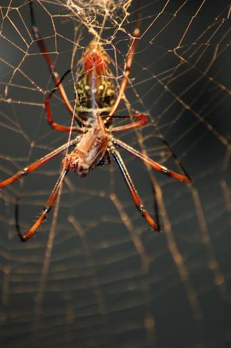 arachnid (1)