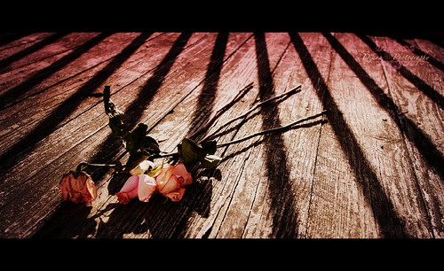 Roses left behind