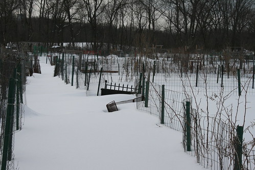 snow covered garden plots 057