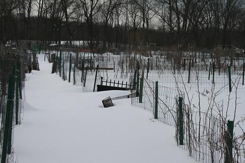 snow covered garden plots 057