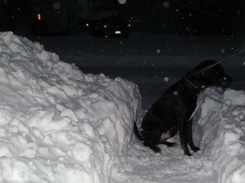 blizzard2011-02-02-11storm