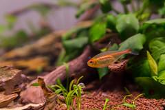 _MG_9822 (dearwalrus) Tags: eheim vivaline 330 canon 70d sigma 1750 acuario aquarium