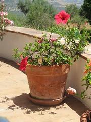 Finca del Nino summer 2017 (LindseyS2008) Tags: fincadelnino periana cantueso