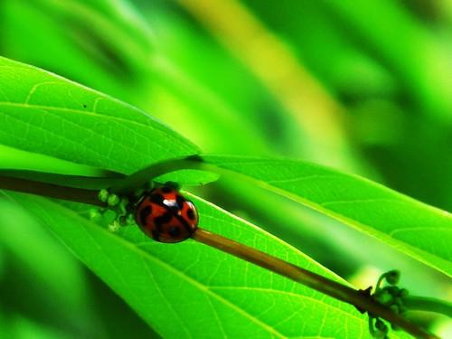 IMG_1217 Beetle
