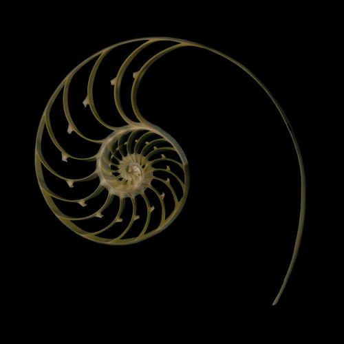 Nautilus Cross Section