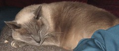 mojo sleeps