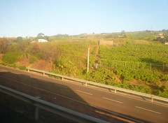 Tenerife: TF-5 (chairmanblueslovakia) Tags: de puerto islands la spain motorway canary picnik tenerfie tf5