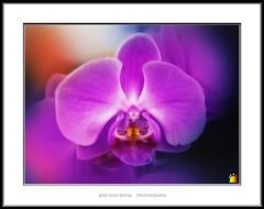 como una diosa (Jose Luis Mieza Photography) Tags: flowers flores flower fleur fleurs flor benquerencia florews reinante jlmieza reinanteelpintordefuego joseluismieza