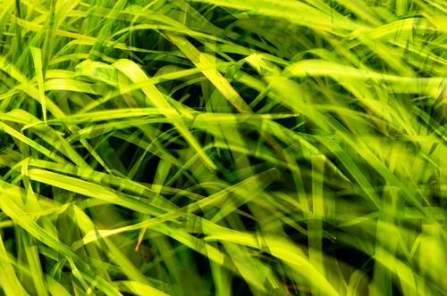 フリー写真素材, 花・植物, 植物(その他), 葉っぱ, グリーン,
